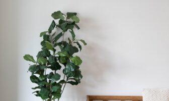 Sådan skaber du et hyggeligt hjem