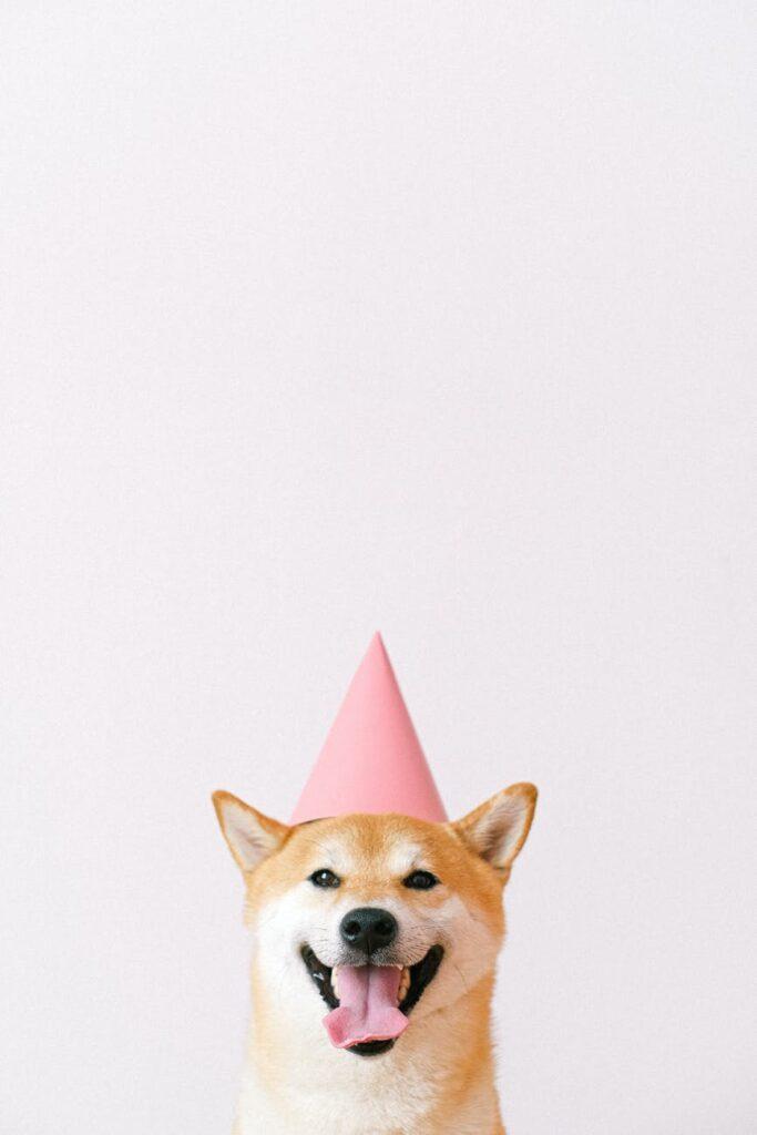 Hund med festhat