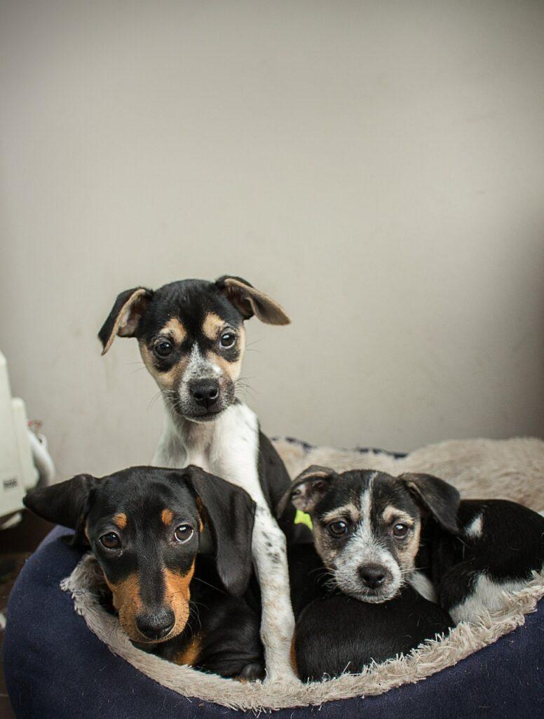 tre hunde i hundekurv