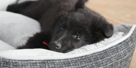 Forkæl din hund med en fluffy hundeseng og lad den sove blød og rart